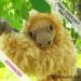 Amelia the Sloth free amigurumi crochet pattern, Hooked by Kati